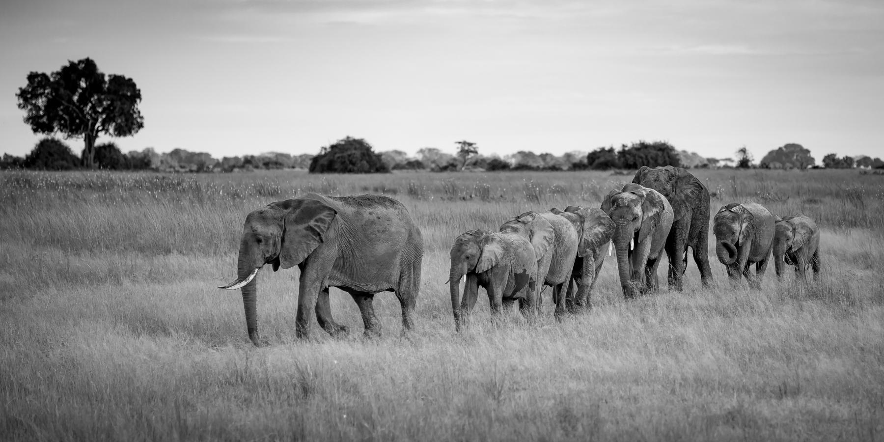 4 Elefanter
