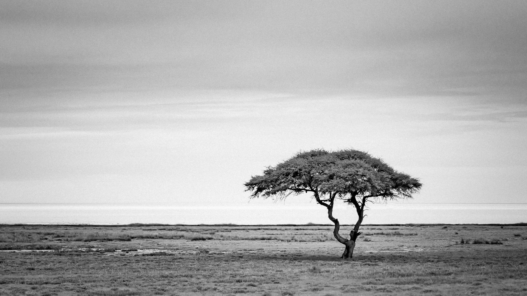 6 Trädet