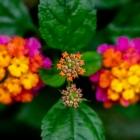 18-f-56882-blomfyrerkeri