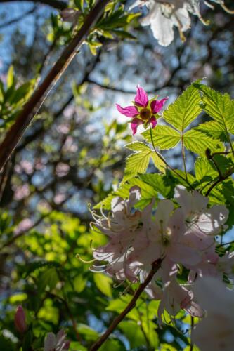f-56882-lysande blomma