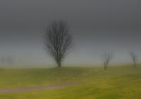 e-87960-träd1