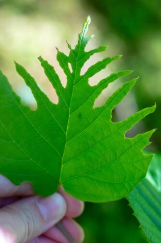 022-mumsigt blad
