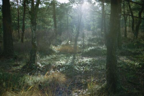 f-50239-skogen1