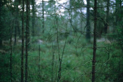 f-50239-skogen2