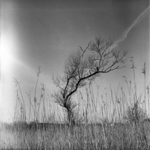 s-50239-träd